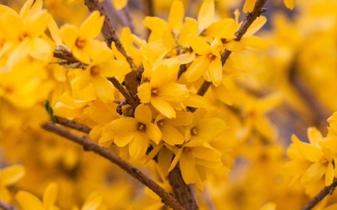 Happy Spring Equinox!!